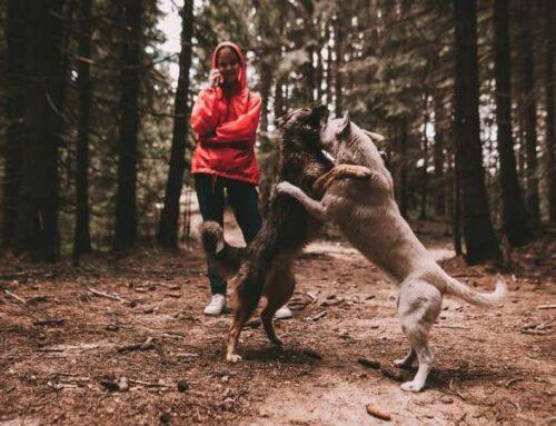 Признаки глистов у собак. Как лечат инвазию