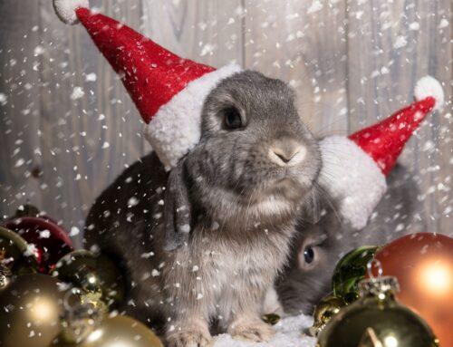 Ветеринарная клиника Вет-Дух поздравляет с Новым Годом!
