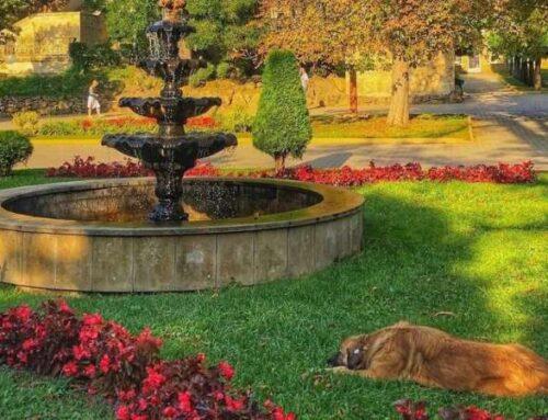 Внутренний туризм: где путешествовать с собакой по Российской Федерации