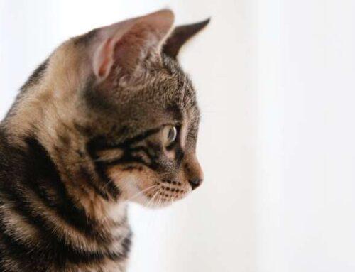 «Можно ли кошкам на стол?» 5 доверчивых вопросов начинающих котовладельцев