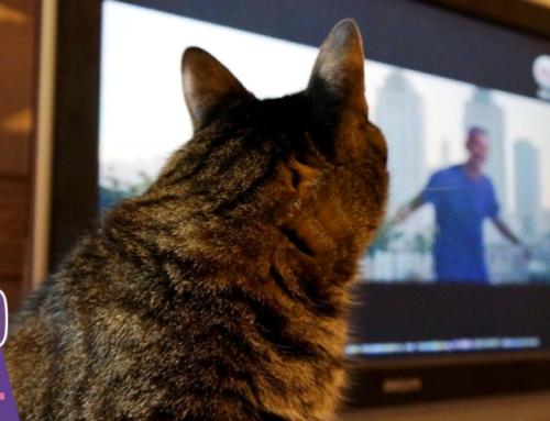 😺Что видят кошки, когда смотрят телевизор