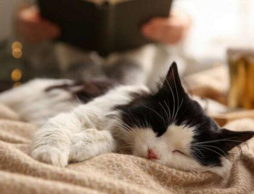 Кошка осознает, как её зовут? 4 нестыдных вопроса про кошачьи имена