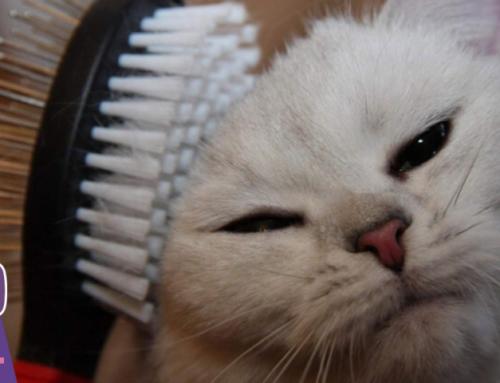 😺5 простых правил для ухода за шерстью кошки