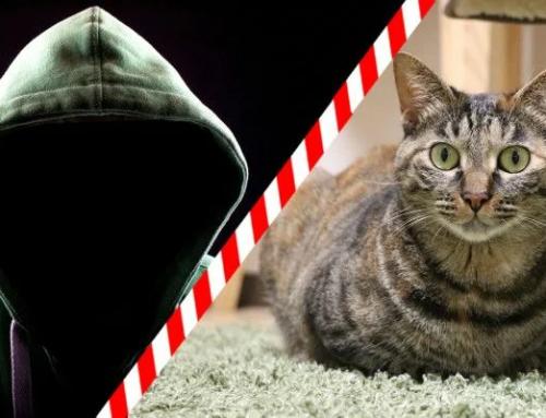🙀Осторожно: кэтхантеры! Берегите своих кошек