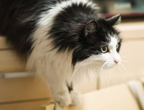 Какой тип личности у вашей кошки