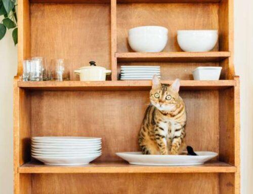 Чем изумить кошку-привереду