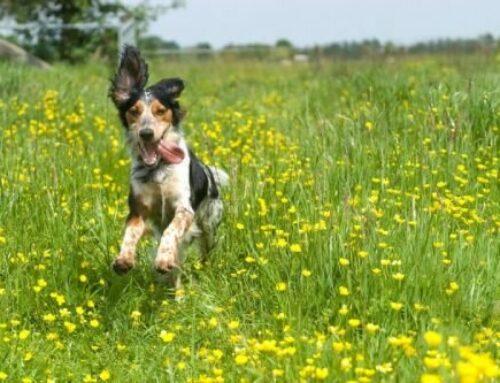 Инстинкты у собак – кратко и доступно – как проявляются, какие бывают, чем отличаются от рефлексов
