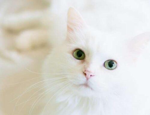 Кошачий этикет: что же все-таки это такое и как не нарушить личные границы кошки