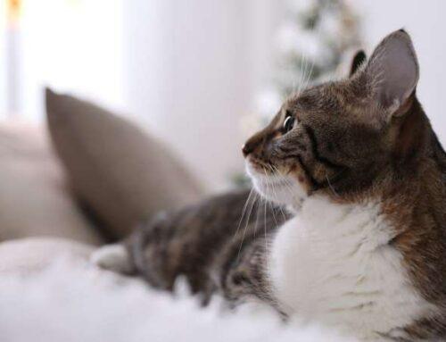 Почему кошка может захворать