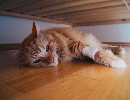 Как понять, что у кошки что-то болит