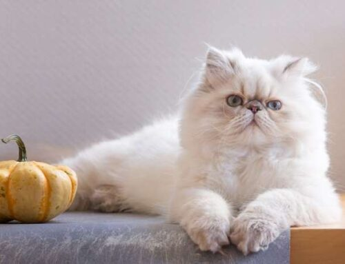 1-ое воспоминание: 1-ое знакомство с кошкой