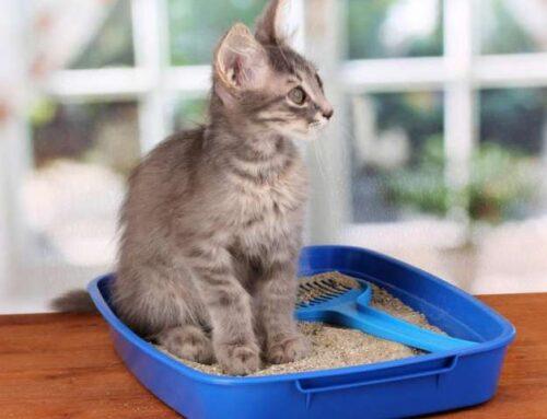 Как правильно выбрать лоток и наполнитель для кошки?