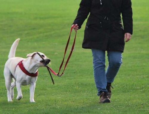 Как разнообразить прогулки с собакой